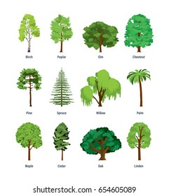 Collection of different kinds of trees: birch, poplar, elm, chestnut, pine, spruce, willow, palm, maple, cedar, oak, linden. Vector illustration isolated on white background.