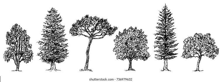 Collection of different kinds of trees. Vector illustration isolated on white background.