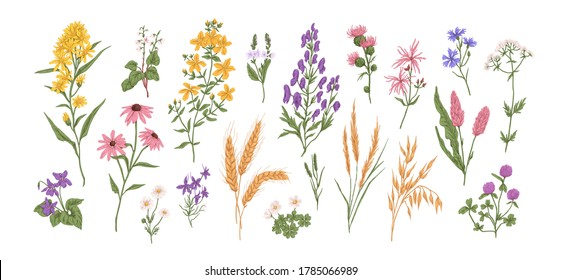 Collection of different medical herbs, wild flower or treatment plants in realistic, natural style. Botanical, decorative wildflowers. Flat vector hand drawn illustration isolated on white background