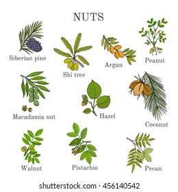 Collection of different nut branches. Hand drawn botanical vector illustration.