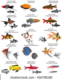 Collection of different species of freshwater fish
