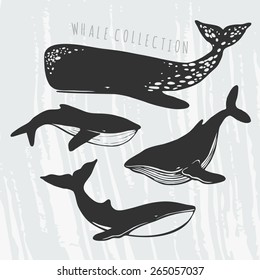collection of different whales, black and white drawings of oceanic mammals