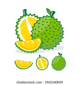 Collection of durian fruits isolated on background. Vector illustration.