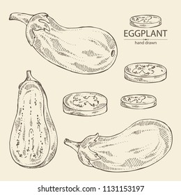 Collection of eggplant: full eggplant, a slice of eggplant. Vector hand drawn illustration.