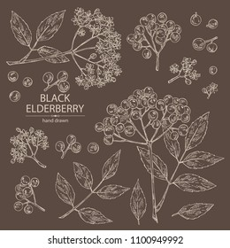 Collection of elderberry black: branch of elderberry , berries, flowers and leaves. Vector hand drawn illustration.