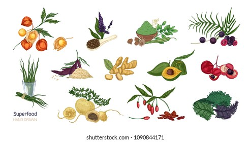 Collection of elegant botanical drawings of superfoods isolated on white background. Fruits, berries, seeds, root crops, leaves and powder. Natural healthy and wholesome food. Vector illustration