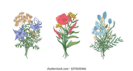 Collection of elegant bouquets or bunches of wild meadow blooming flowers and flowering herbs isolated on white background. Bundle of floral decorative design elements. Realistic vector illustration.