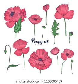 Poppy flower images stock photos vectors shutterstock collection of elegant detailed botanical drawings of wild blooming pink poppy flowers seed heads mightylinksfo
