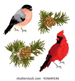 Collection of element for merry christmas or happy new year. Bullfinch, cardinal bird and fir-cone on white background
