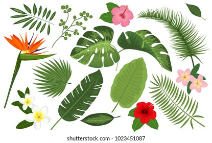 Collection of exotic plants. Vector illustrations with tropical leaves and flowers in watercolor style. Palm leaf, banana leaf, hibiscus, plumeria flowers, jungle trees. Botanical, floral illustration