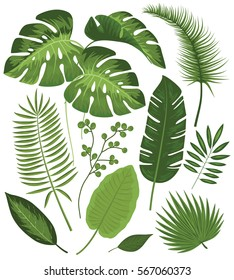 Collection of Exotic Plants Vector Illustrations with Tropical Leaves