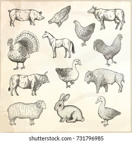 Collection of farm animals. Hand drawn vector isolated illustrations.