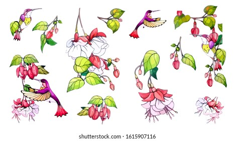 Collection floral, botanical vector stock illustration in vintage, watercolor style on isolated background. Set floral design elements of spring, summer pink flower, green leaves, branches, colibri.