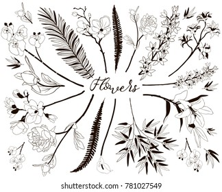 Collection of Floral Design Elements. Hand Drawn Branches and Flowers. Decorative Vector Illustration. Lily Flower, Cherry Blossom, Calla,Orchid, Peony, Fern Leaf, Bamboo Leaves,