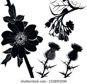 collection of flower silhouettes of medicinal plants comfrey, milk thistle, rose hip