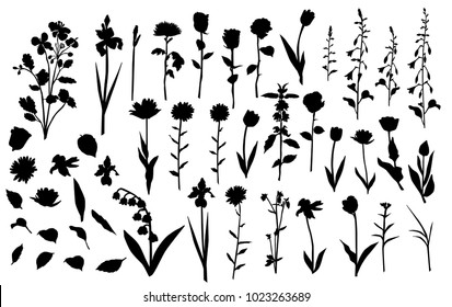 Collection of flower silhouettes, rose, lily, Tulip, Daisy, bell, dandelion, chrysanthemum, iris, wild flower, grass, leaves, black color, isolated on white background