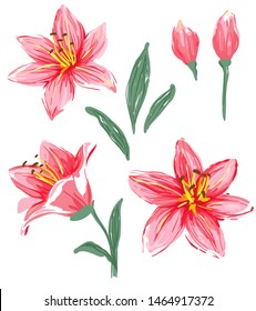 Collection of flowers and leaves of pink lily. Hand drawn vector illustration, isolated on white background.