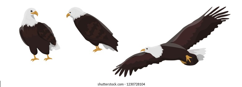 Collection of flying and sitting bald eagles. Bird of North America. Vector animals