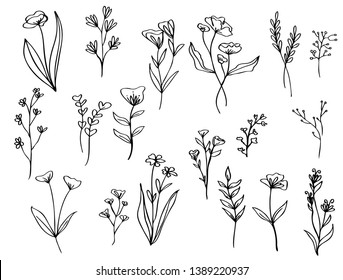 collection forest fern eucalyptus  art foliage natural leaves herbs in line style. Decorative beauty elegant illustration  for design Vector flower Botanical