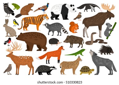 Collection of Forest wild animals