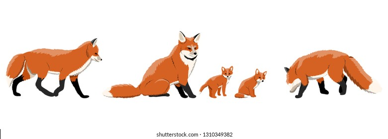 A collection of foxes in various poses. Adult foxes and cubs. Wild animals of Europe, Asia, America, Scandinavia and Canada and North Africa. Realistic Vector