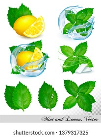 Collection of fresh mint and melissa leaves with lemon in splash of water. Vector set