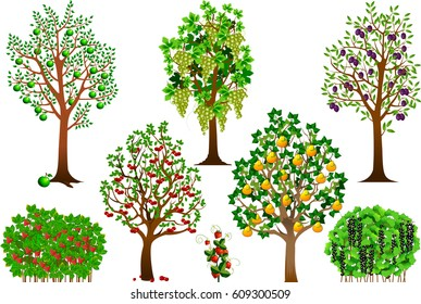 Collection of fruit trees, bushes and berries, vector and illustration
