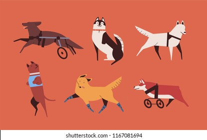 Collection of funny disabled dogs isolated on orange background. Bundle of happy domestic animals or pets with prosthetic limbs or artificial legs. Colorful vector illustration in flat cartoon style.
