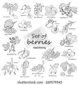 Collection of garden and wild berries in sketch style. Vector illustration for your design