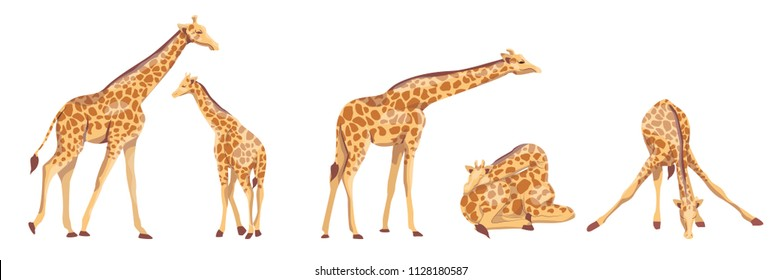 Collection of giraffes. Animals of Africa. Wild nature. Vector illustration, isolated on white background