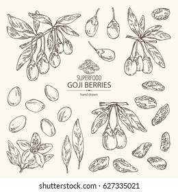 Collection of goji: plant, flower and goji berries. Superfood. Hand drawn