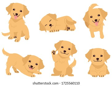 The collection of golden retriever in many action. Graphic resource about golden retriever for graphic, content, etc.