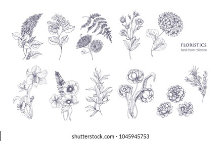 Collection of gorgeous floristic flowers and wild flowering plants hand drawn with black contour lines on white background. Bundle of elegant natural decorations. Hand drawn vector illustration.