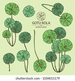Collection of gotu kola: branch of gotu kola. Centella asian. Cosmetic and medical plant. Vector hand drawn illustration.