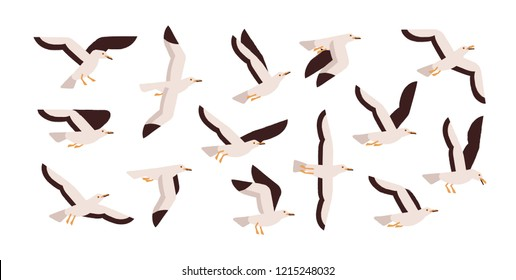 Collection of graceful flying seagulls isolated on white background. Set of ascending, descending and soaring gulls. Gorgeous bird or seabird. Colorful vector illustration in flat cartoon style.