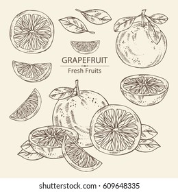 Collection of grapefruit and grapefruit slice. hand drawn