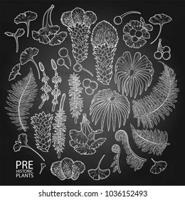 Collection of graphic prehistoric plants isolated on the chalkboard
