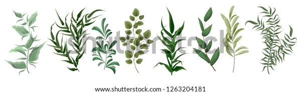 Collection of green plants. Elements for design. Vector plants.