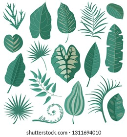 Collection of green tropical leaves, palm tree branches, banana leaf and exotic rainforest leaves in cartoon style. Botanical set with summer Hawaiian paradise plant elements, jungle floral foliage.