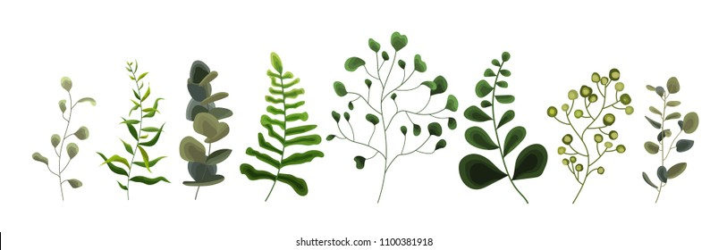 Collection of greenery leaf plant forest herbs tropical eucalyptus leaves spring flora in watercolor style. Vector botanical decorative illustration for invitation card