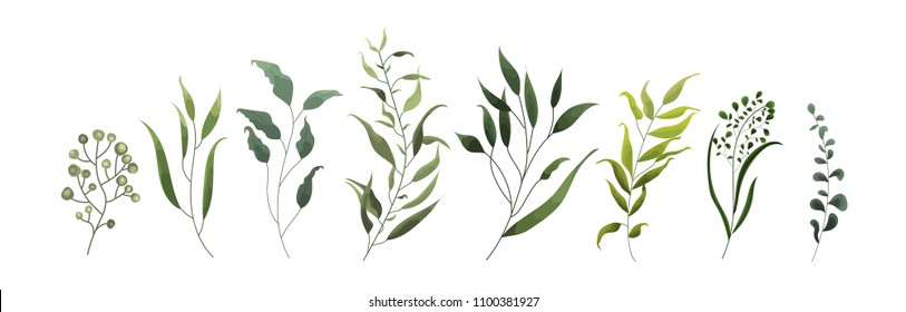 Collection of greenery leaf plant forest herbs tropical leaves spring flora in watercolor style. Vector botanical decorative illustration for invitation card