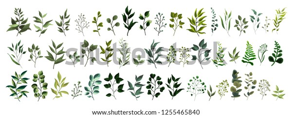 Collection of greenery leaf plant forest herbs tropical leaves spring flora in watercolor style. Vector botanical decorative illustration for wedding invitation card