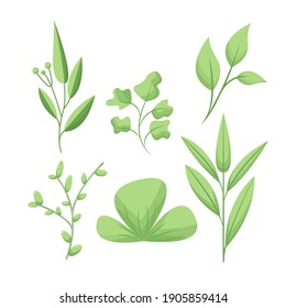 Collection of greenery leafy plants forest grass trails leaf spring flora. Vector botanical decorative illustration for wedding invitation or textile products