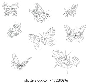 Collection of hand draw realistic butterflies - vector