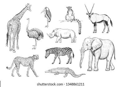 Recogida de dibujos a mano de animales africanos sobre fondo blanco