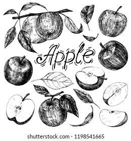 Collection of hand drawings with apples. Ink sketch isolated on white background. Hand drawn vector illustration. The style of engraving.