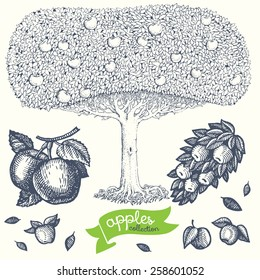 Collection of hand drawn apple-tree and apples. Vector.