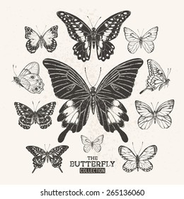 A collection of hand drawn butterflies.