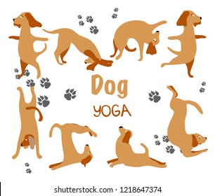 Collection hand drawn. Dog yoga. Transparent background. Vector