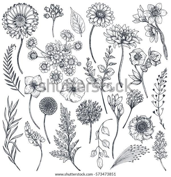Vector de stock (libre de regalías) sobre Colección de plantas y ...